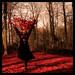 autumn dance by Stijn Coppens