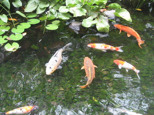 Natural algae treatment for ponds my dog ate my money for Koi pond algae control