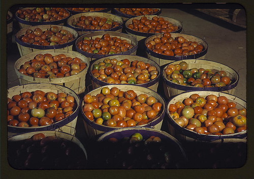 Tomatoes at the Yauco Cooperative Growers' Association, Puerto Rico  (LOC)