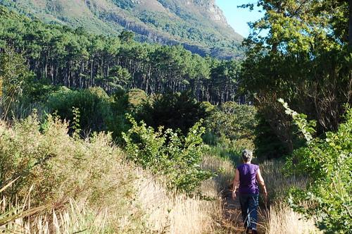 Newlands Forest Walk