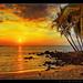 Hawaiian Palm Sunset by Mellard