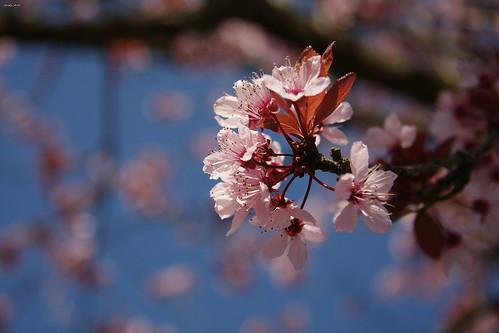 flower macro geneve blu swiss cielo fiori svizzera 2008 albero ginevra riflessione pistilli jodyart jodysticca goldstaraward pertechenontifaipiùsentire proverbiogiapponese