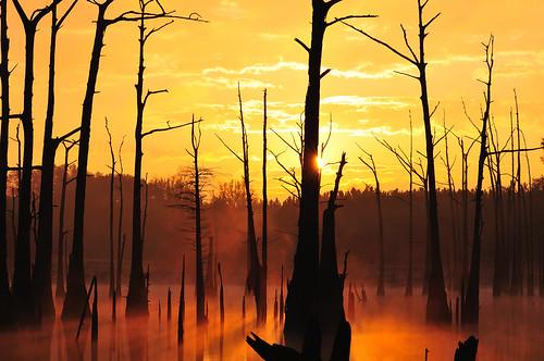 sunrise georgia swamp bainbridge d300 fotosniper openpond 80200mmf28dnew