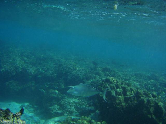 LAKSHADWEEP Under Water Androth Island