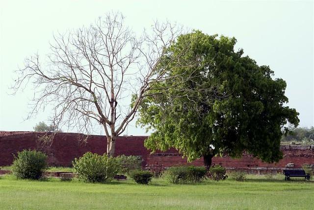 Header of nalanda