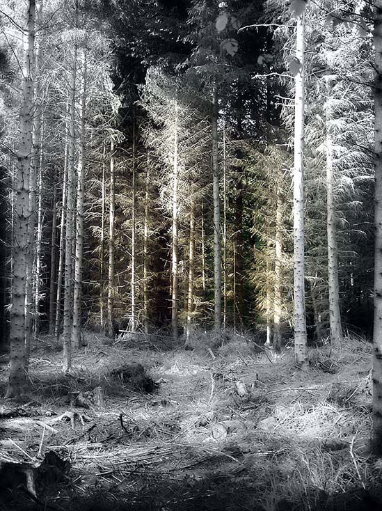 Photography - Forest by Nicholas M Vivian