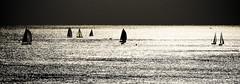 Barche a vela / Sailing