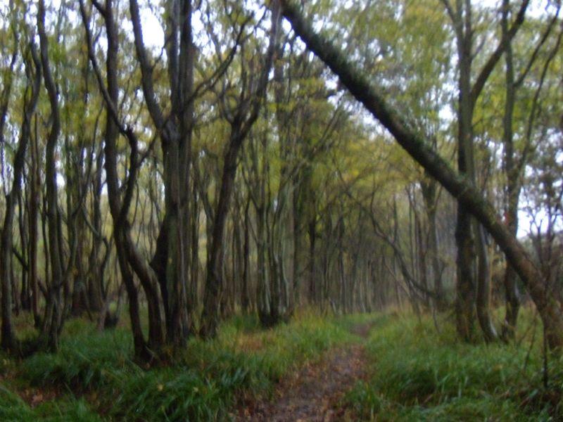 Wet wet wet Robertsbridge to Battle