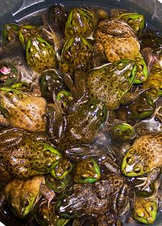 Bucket of frogs