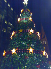 Melbourne's big tree