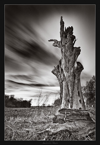 old tree clouds long exposure afternoon wind windy lee nd filters gnd
