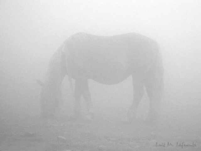 Niebla..                        In the fog..