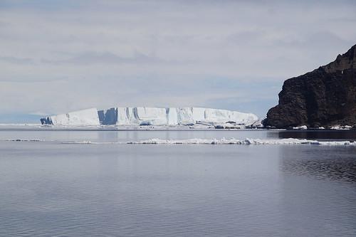 590 Weddell Sea met Adeliepinguin