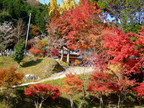 紅葉の中の寺