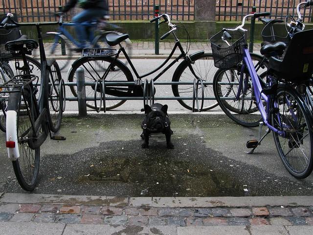 Bike Guard Dog