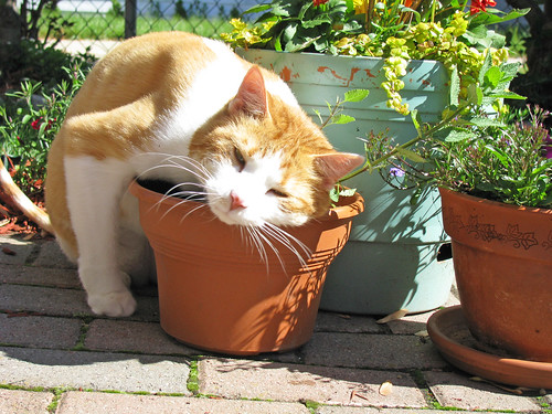 Catnip plant, Self Indulgence