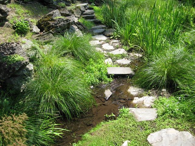 Accent plants near water flickr photo sharing for Bassin de jardin japonais