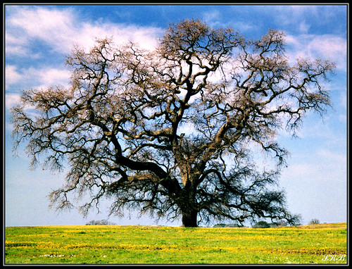 california trees nature landscape oroville