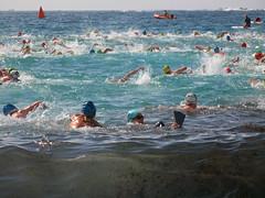 Bondi swimming competition