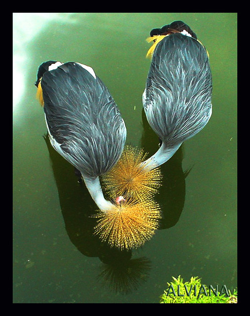 Pair of bird