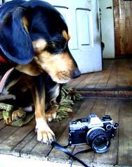 Olympus OM-10 (camera)