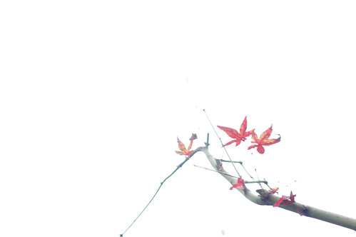 Remaining Momiji Leaves