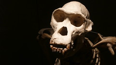 skeleton, sculpture, head, darkness, jaw, bone, skull,