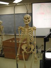 tourist attraction(0.0), sculpture(0.0), human body(0.0), art(1.0), skeleton(1.0),
