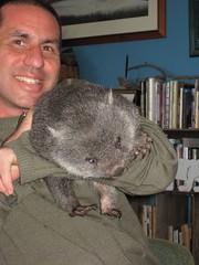 rat(0.0), koala(0.0), chinchilla(0.0), animal(1.0), wombat(1.0), pet(1.0), mammal(1.0),