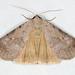 Noctuidae II - 8490-8879