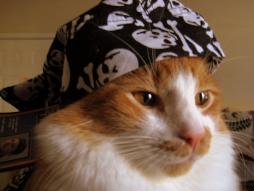 ,,,^..^,,, RETURN OF PiRATE KOGA