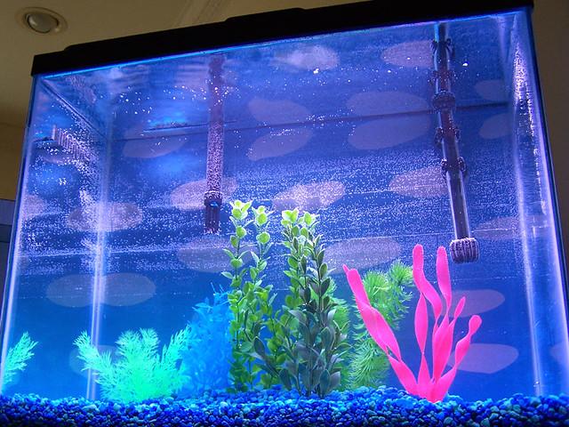 new fish tank I got a new fish tank that sits beside my de ...