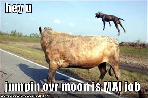 hey diddle diddle, the dog jumped over the moon...