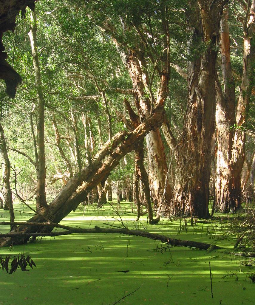 Hunter Green Carpet Green Carpet 9x12 Area Rugs