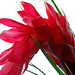 Small photo of Torch ginger