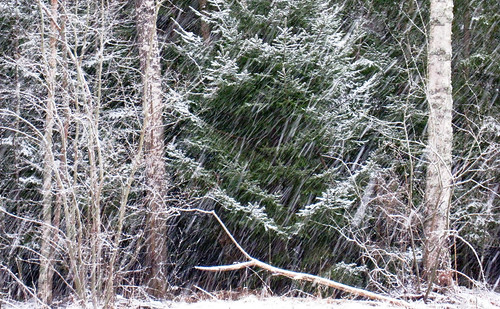 winter snow cold tree forest sweden ydrefors upcoming:event=371132