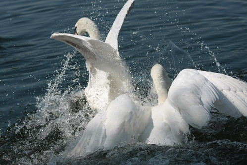 Swan v Swan Fight Sequence - Part 4
