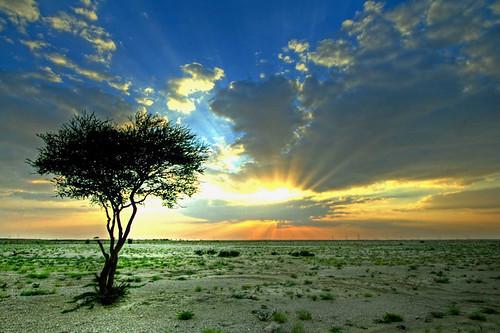 landscape sunset. memotret landscape sunset