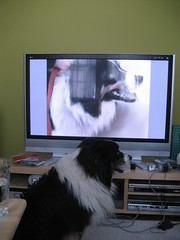 Bingo watching himself on TV