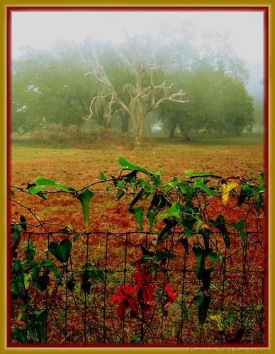 fog florida foggy jenkins bushnell contrastingcolors ingepold
