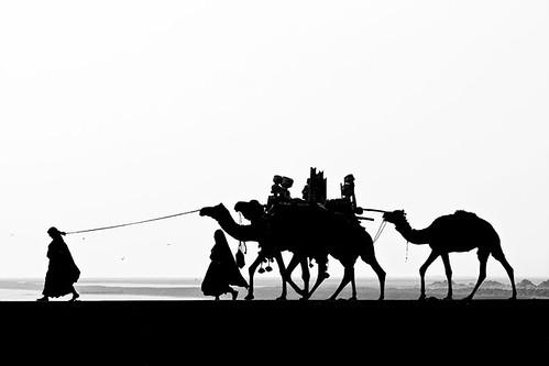 life road sunset people blackandwhite bw woman india water birds silhouette dark landscape evening countryside women desert wide camel caravan grayscale tribe gujarat kuchchh kutch divs divyesh customary divssejpal sejpal diamondclassphotographer flickrdiamond naturessilhouettes bsb2007mybest