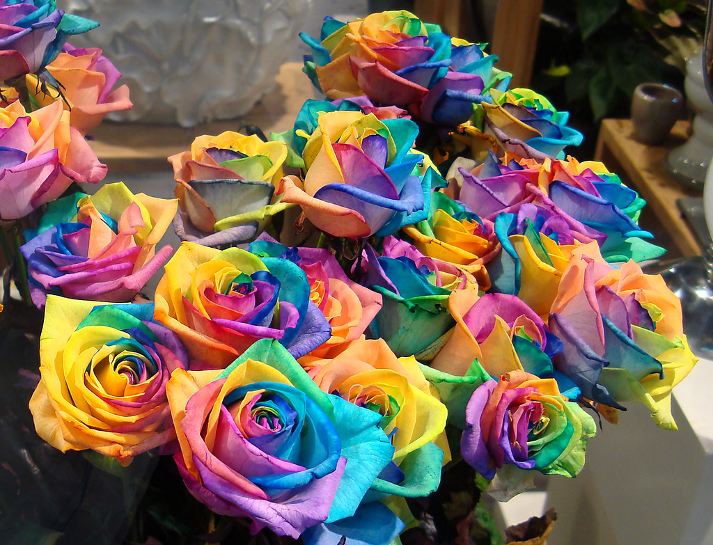 rainbow roses flickr photo sharing