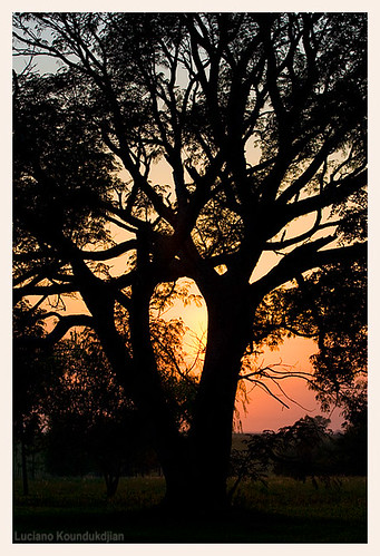 tree nature rural sunrise landscape top country campo entrerios