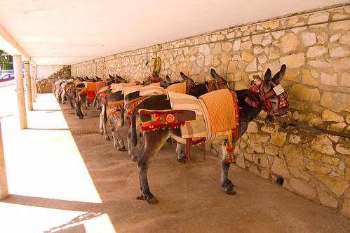 Lugar donde descansan y se asean los burrotaxis de Mijas.