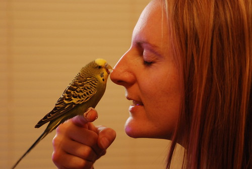 Bad Budgie bites