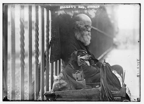 Sieht romantischer aus als es ist: Ein Hundeleben auf der Straße (um 1910)