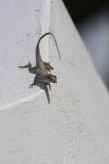 Very cute little lizard