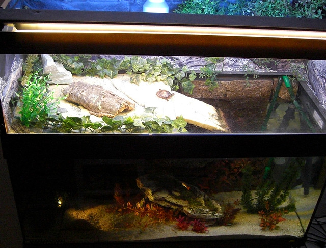 Aquarium Ideas for Fish and Turtles. on Pinterest Turtle Tanks, Fish