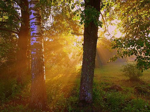 morning trees summer mist tree misty fog landscape foggy puu puud suvi morningfog hommik udu mistysunrise maastik foggysunrise päikesetõus 25faves olympuse400 mywinners abigfave welcometoestonia platinumphoto anawesomeshot superbmasterpiece janne4janne udunepäikesetõus udune