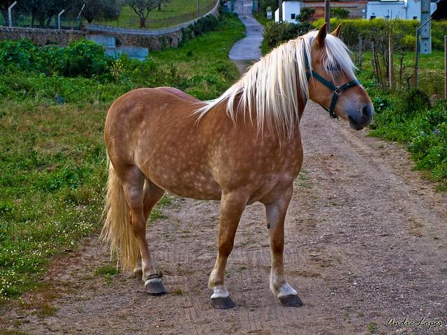 Potro Pony A Photo On Flickriver
